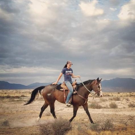 TD Equine: Horses & More!
